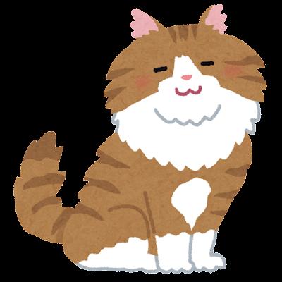 cat_norwegian_forest_cat_brown