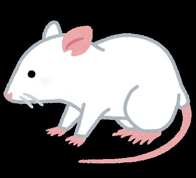 animal_rat_white