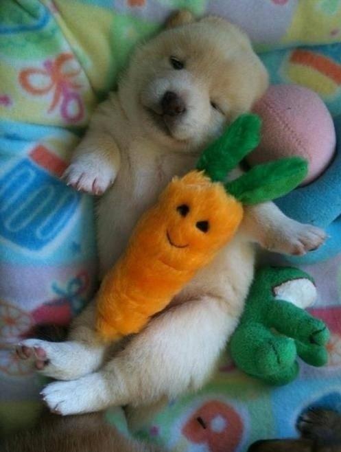 puppy13
