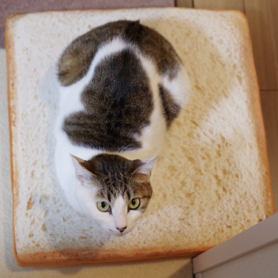 猫とPCケース 68台目 [無断転載禁止]©2ch.netYouTube動画>40本 ->画像>1029枚
