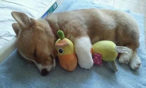 puppy05