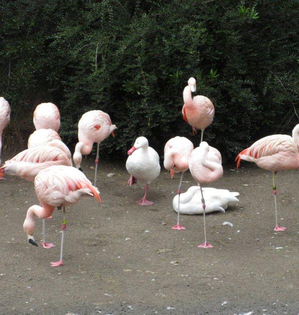 鳥の世界にも空気を読むという文化があったwwwwwwww:ハムスター速報