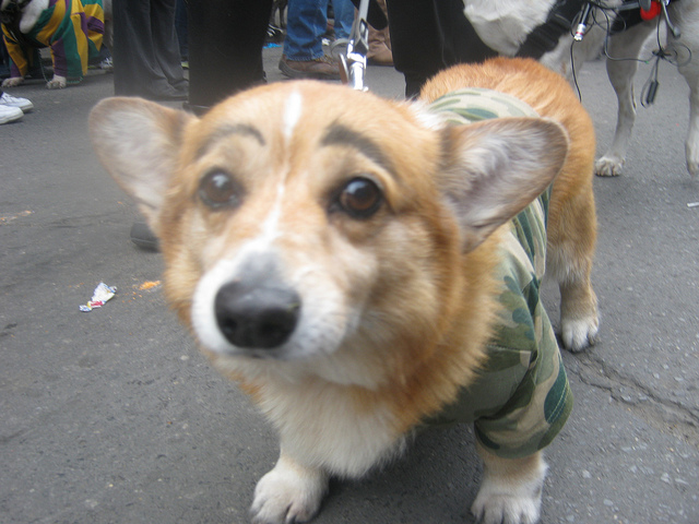 mayudog12