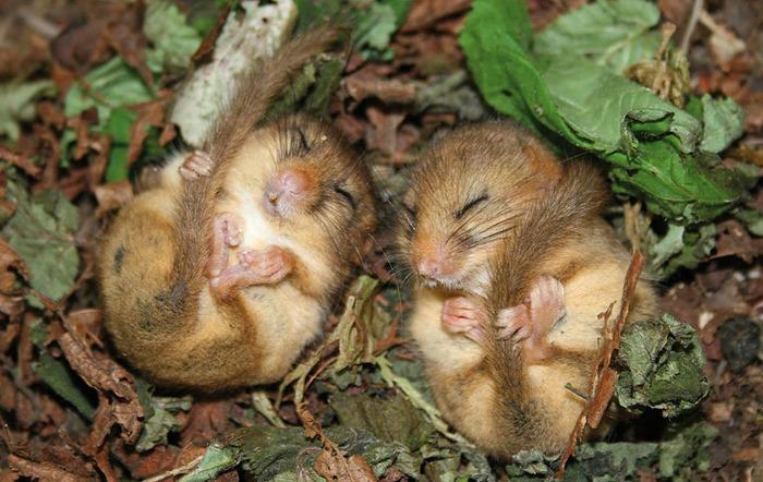 mice09