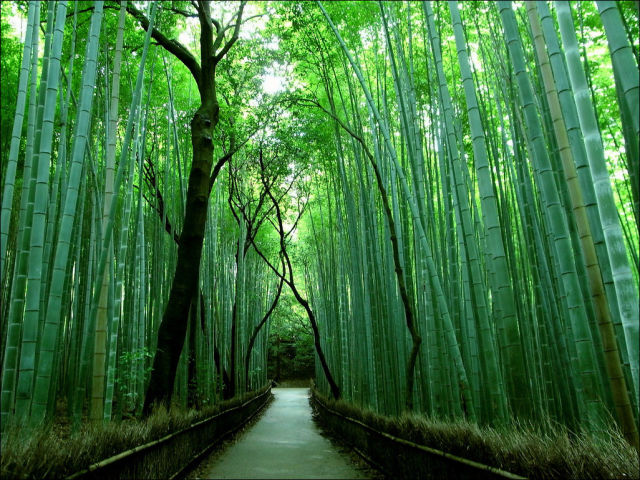 fantastic_bamboo_grove_in_japan_640_03