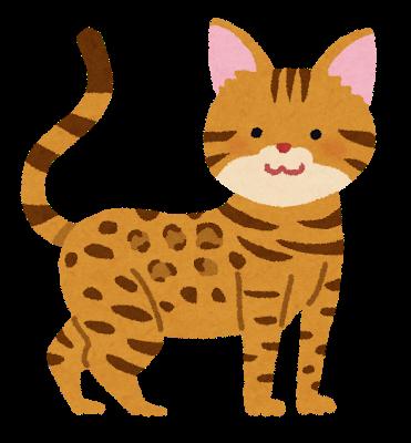 cat_bengal