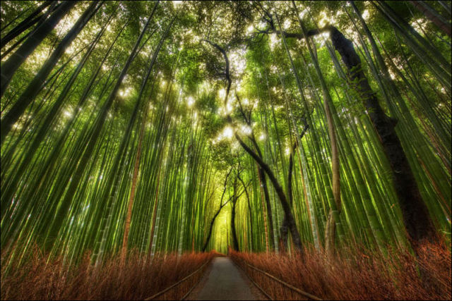 fantastic_bamboo_grove_in_japan_640_13