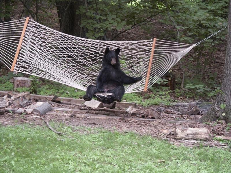 ハンモックとかわいいクマ