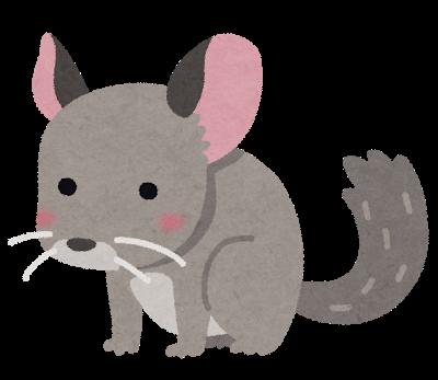 animal_chinchira