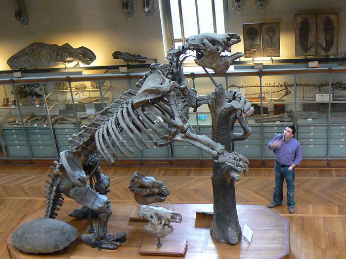 実在した巨大生物・古代のナマケモノ