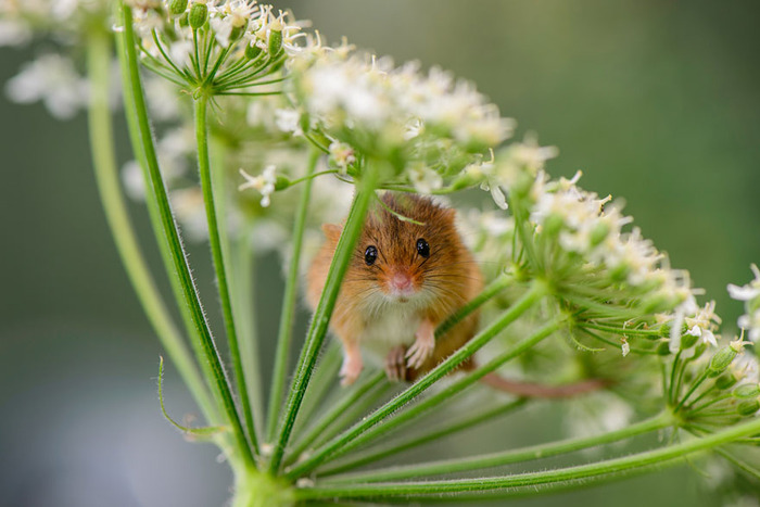 mice06