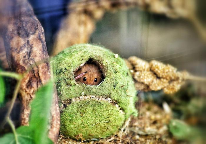 mice11