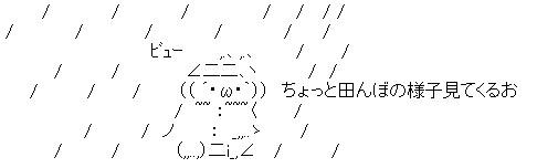 taifuaa