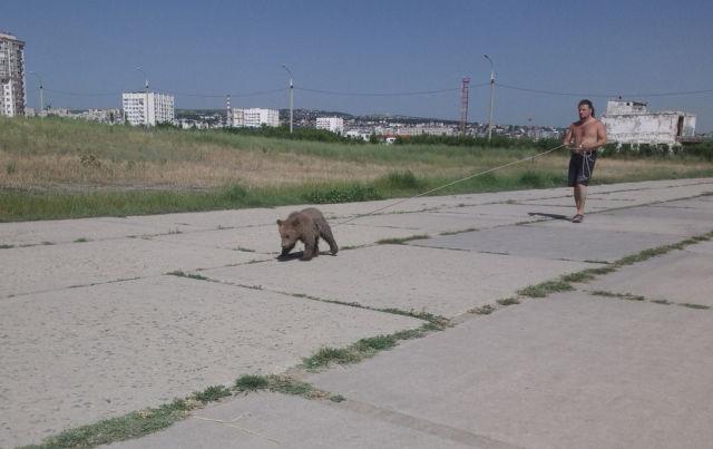bear07