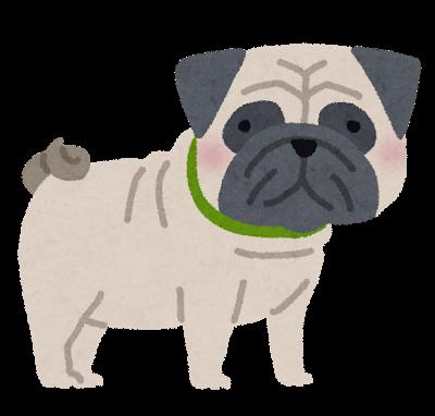 dog_pug