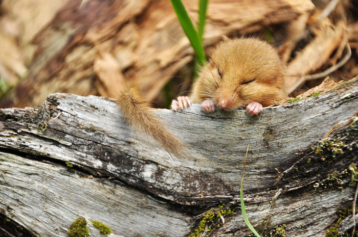 mice14