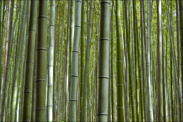 fantastic_bamboo_grove_in_japan_640_10