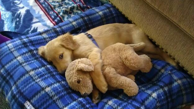 puppy07
