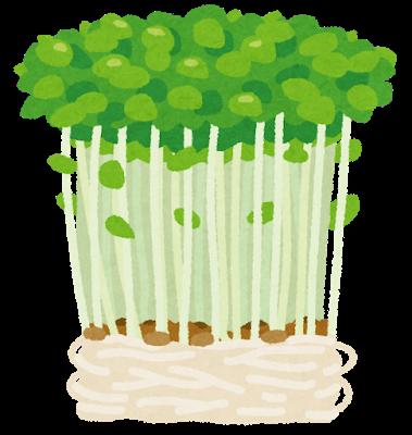 vegetable_toumyou