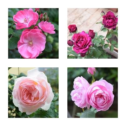 ピンクも色々