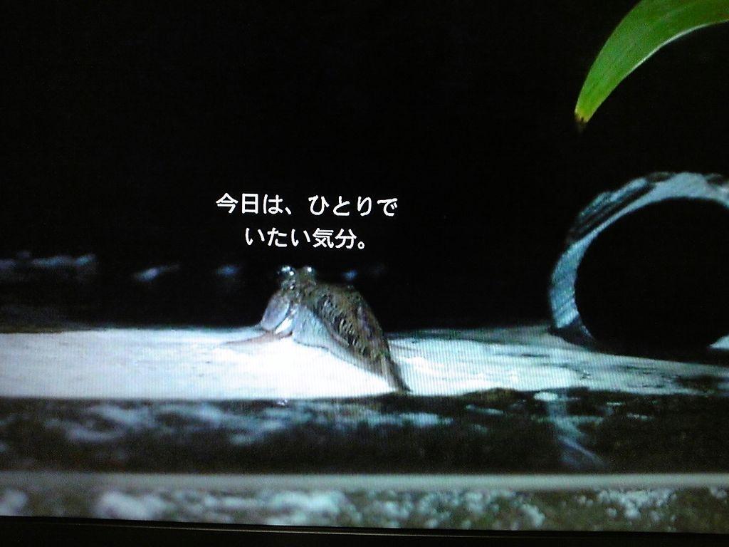 """前へ 次へ 出典  【NHK Eテレ 2355】トビハゼの""""トビー&q"""