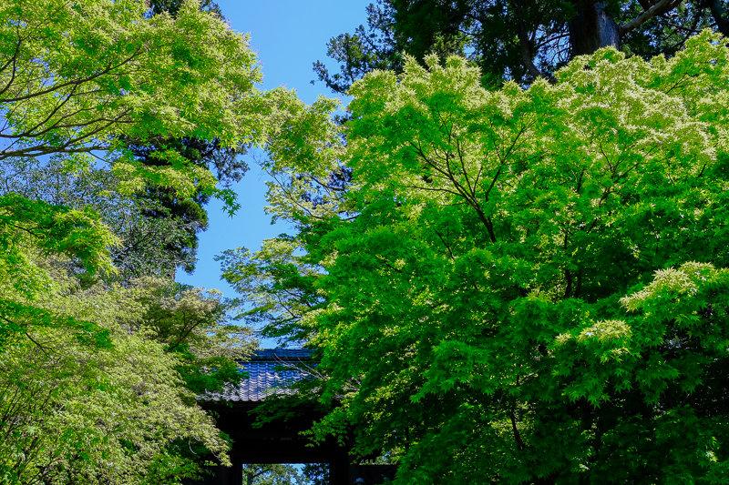 20170423_円覚寺