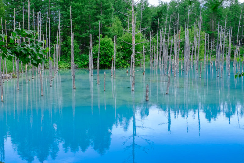 20170720_青い池_4