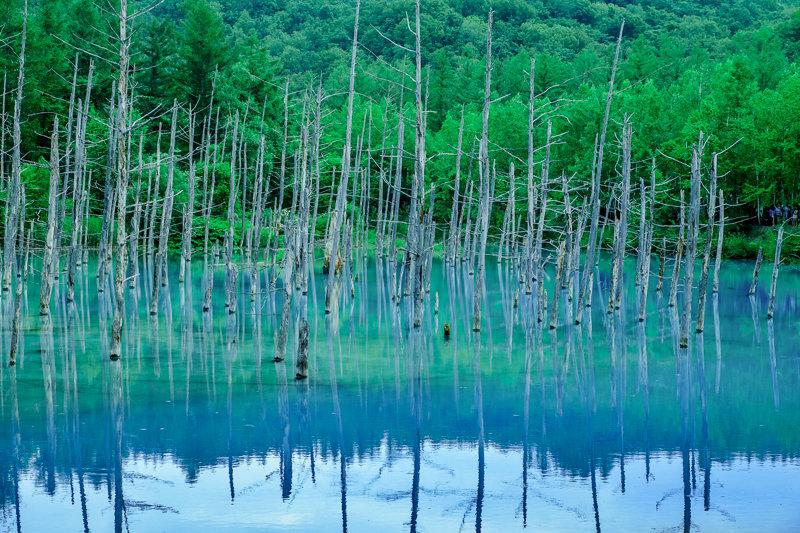 20170720_青い池_7