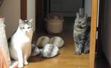 猫jららし集中
