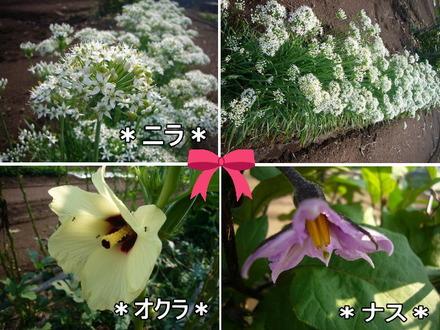 野菜の花4w