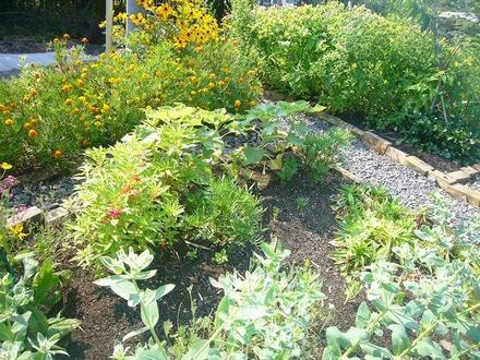 7月の花壇