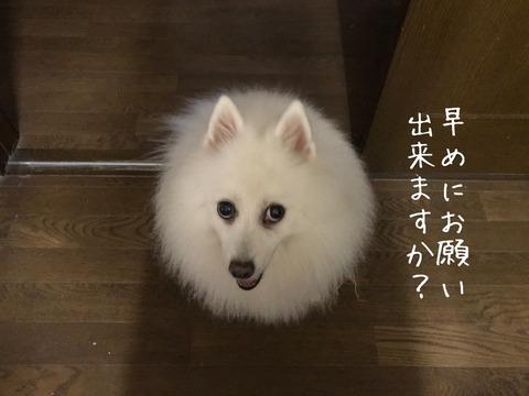 IMG_5694