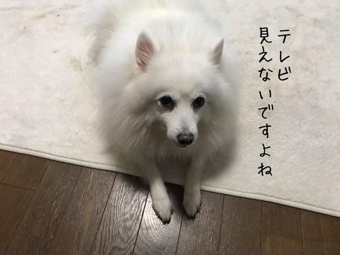 IMG_7404