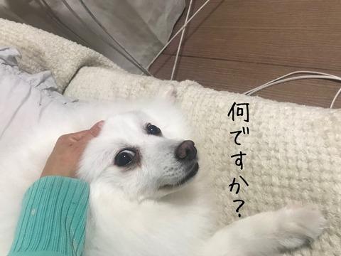 IMG_6395
