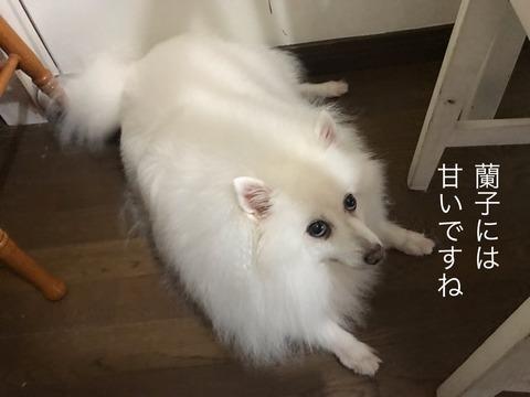 IMG_7865