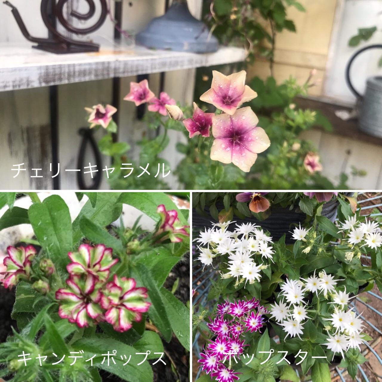 春 種まき 花