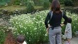 T子姉さんのフジバカマの花園で3