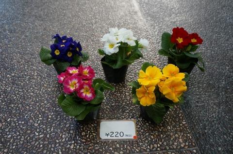 DSC00908 (640x425)