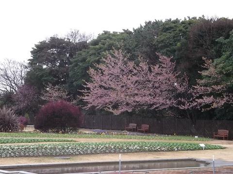 1703005 三陽ミュージアム 見頃の花(3月15日)tags[千葉県]