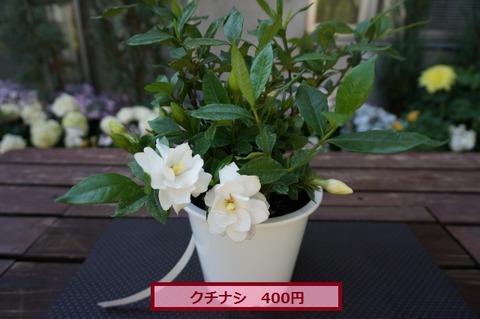 DSC05290 (640x425)