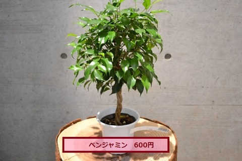 DSC_0049 (640x427)
