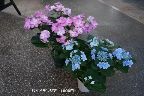 DSC08642 (640x425)
