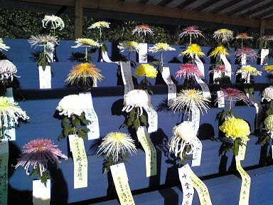 SH010687 切り花