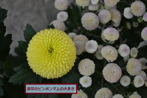 DSC_0045 (640x427)