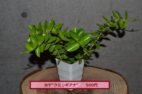 DSC_0013 (640x427)