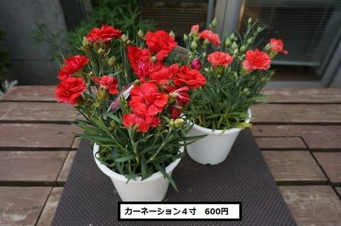 DSC00890 (640x425)