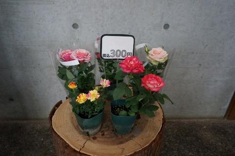 DSC00272 (640x425)