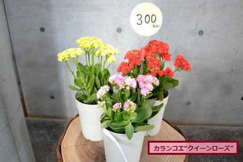 DSC_0009 (640x427)