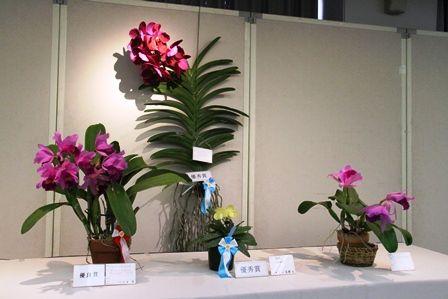 20121004HP3(洋ラン)