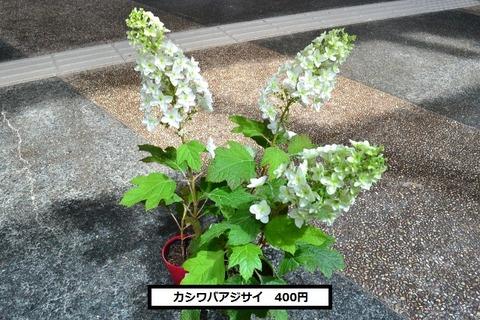 DSC_0050 (640x427)